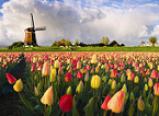 Holland